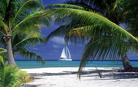 Yachtcharter Karibik - kleine Antillen - Segelyacht mit Palmen